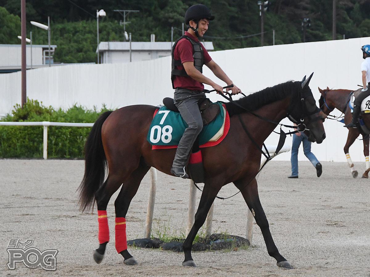 ブルベアヤマイモの馬体写真