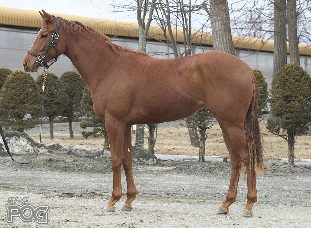 レッドラフェスタの馬体写真