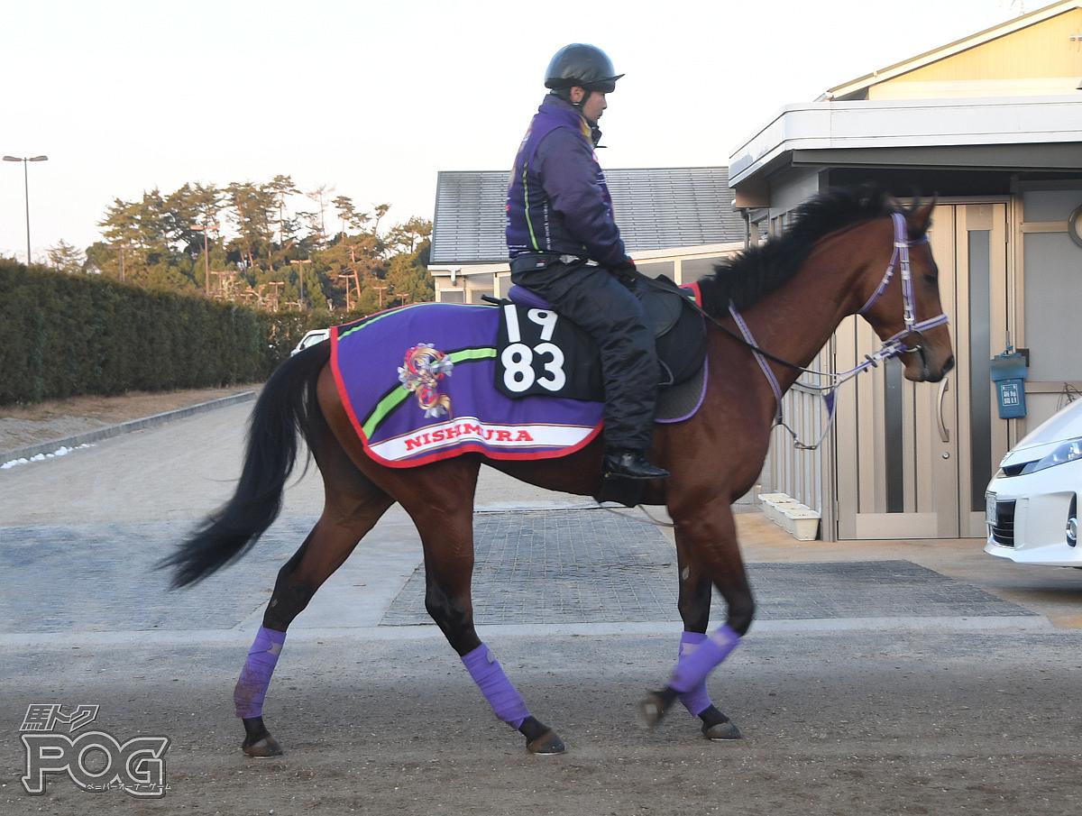 アカネコントレイルの馬体写真