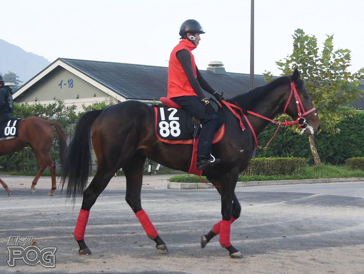 モズマーチャンの馬体写真