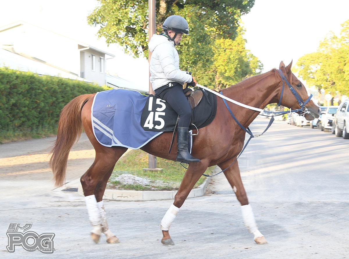 アヴィドウィナーの馬体写真