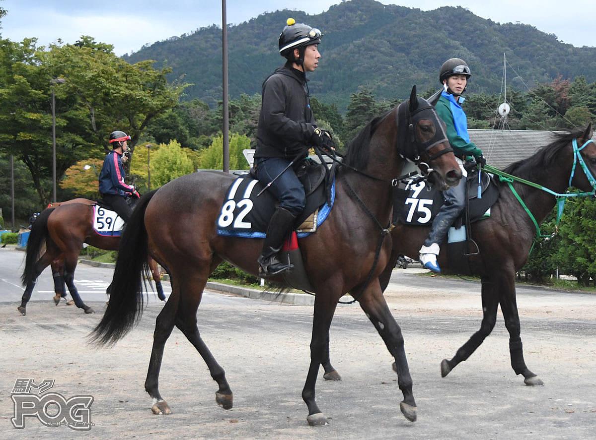 ローズベストの馬体写真