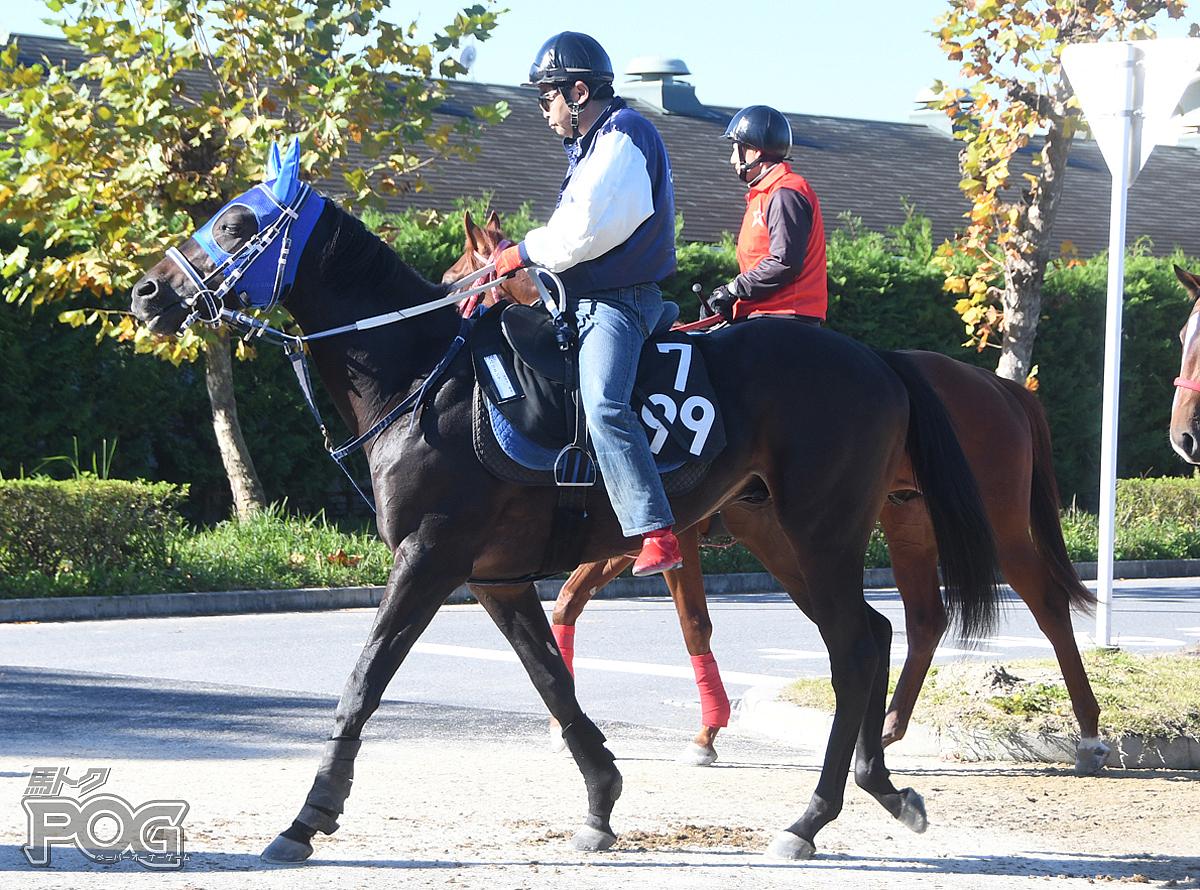 バリエンテの馬体写真