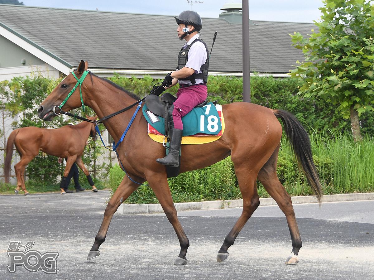 チャノカオリの馬体写真