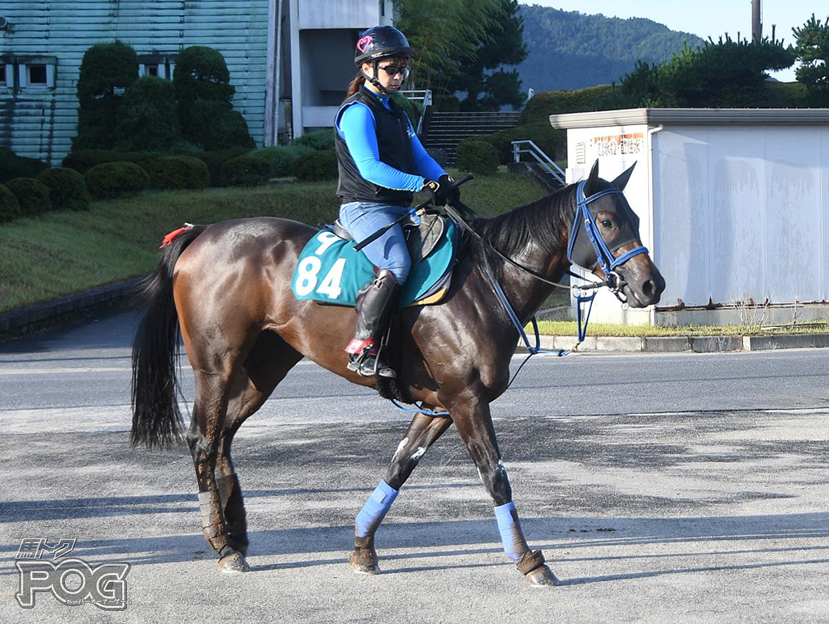 メイグッドミーの馬体写真
