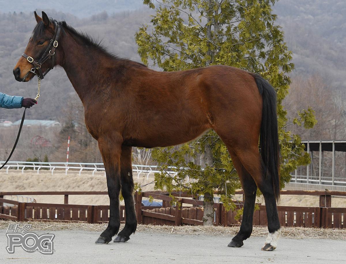ターキッシュバンの馬体写真