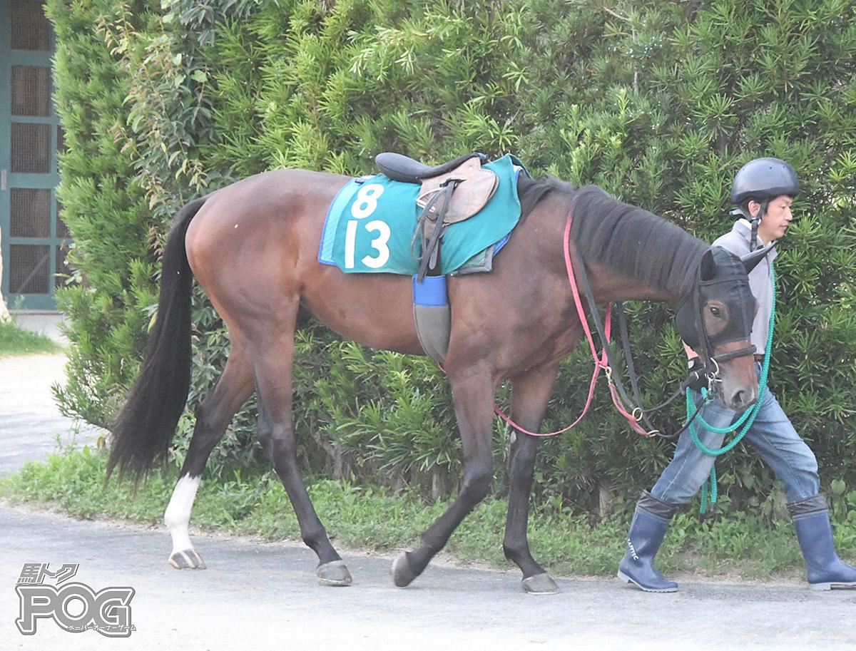 ハンズヘイローの馬体写真