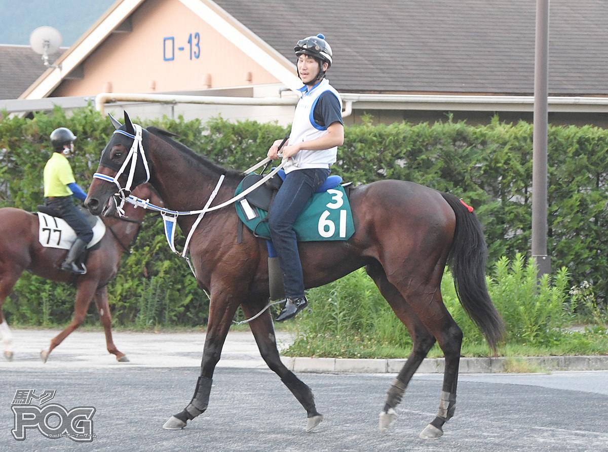 ウインルーカスの馬体写真
