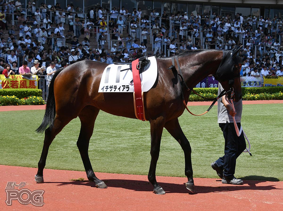 イチザティアラの馬体写真