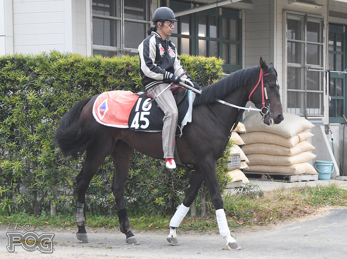 ガーネットクロスの馬体写真