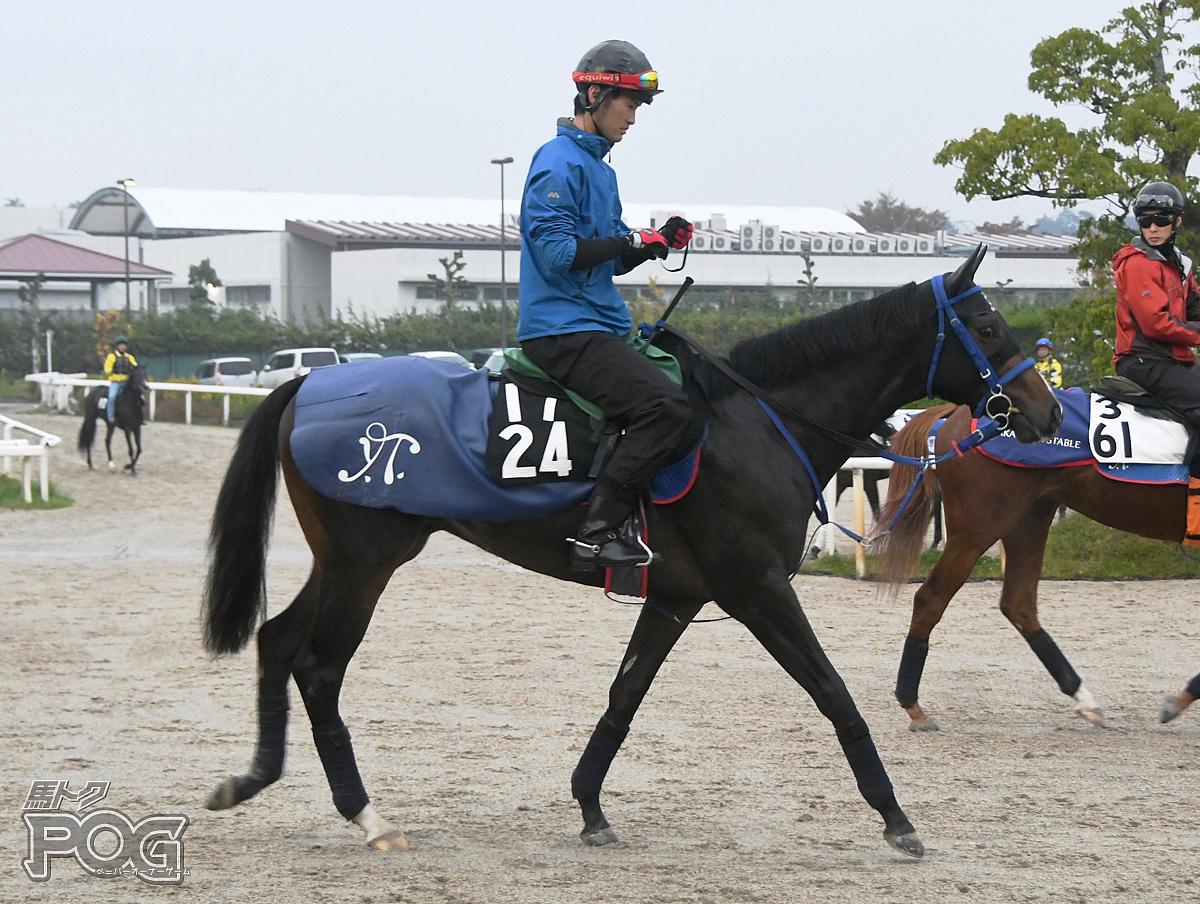 ロードアンノウンの馬体写真