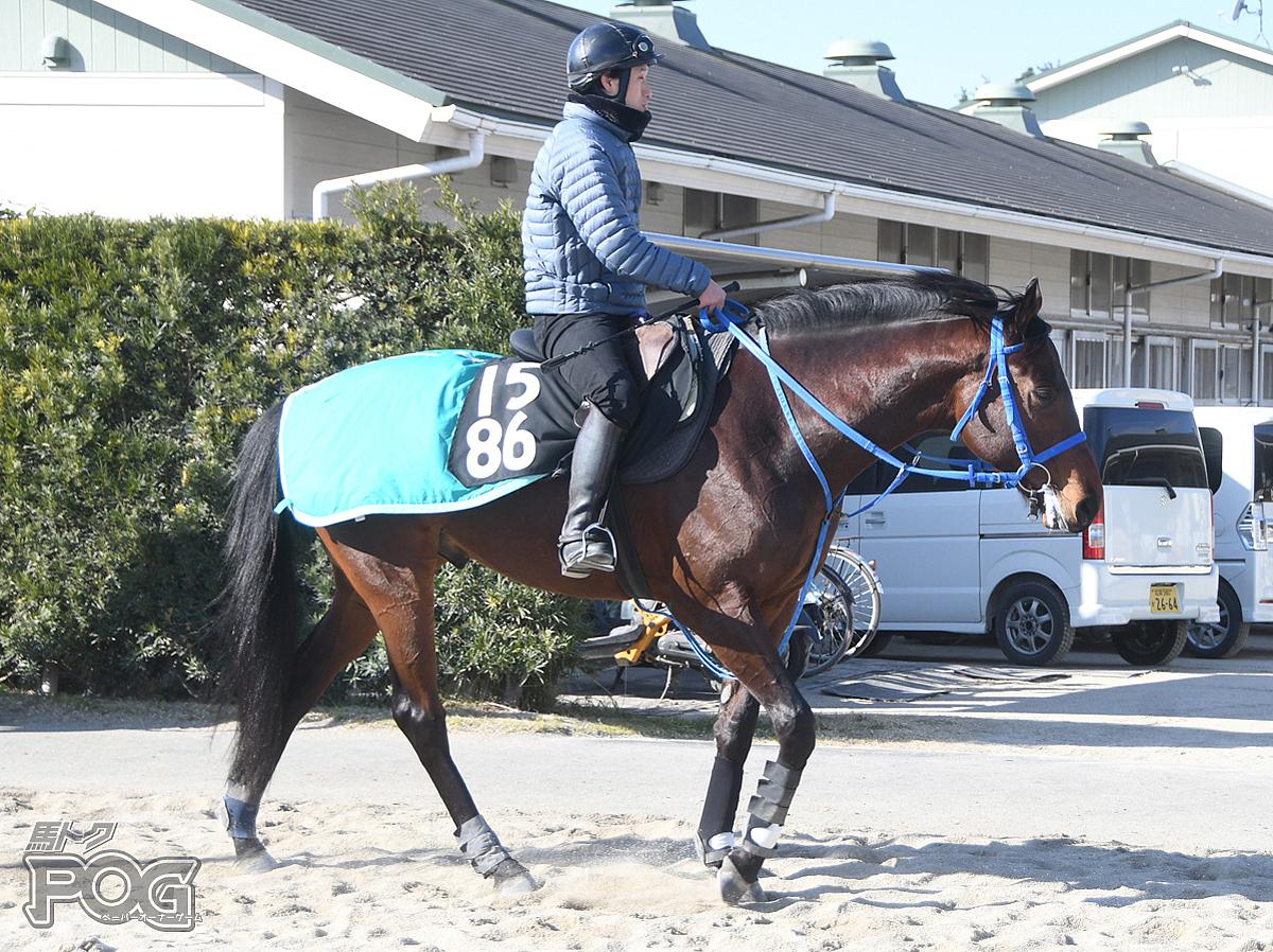 ロードザナドゥの馬体写真