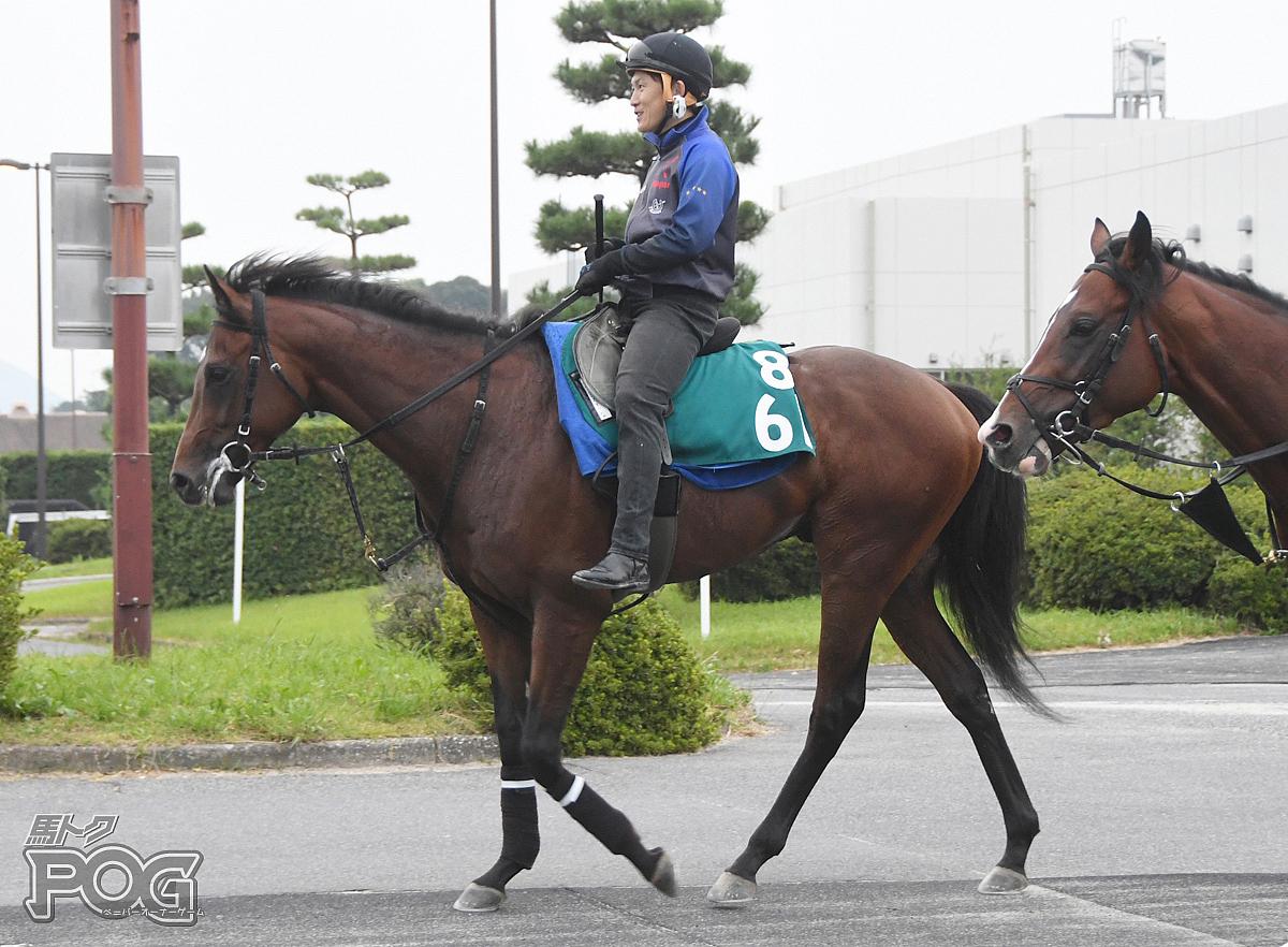ダノンスマッシュの馬体写真