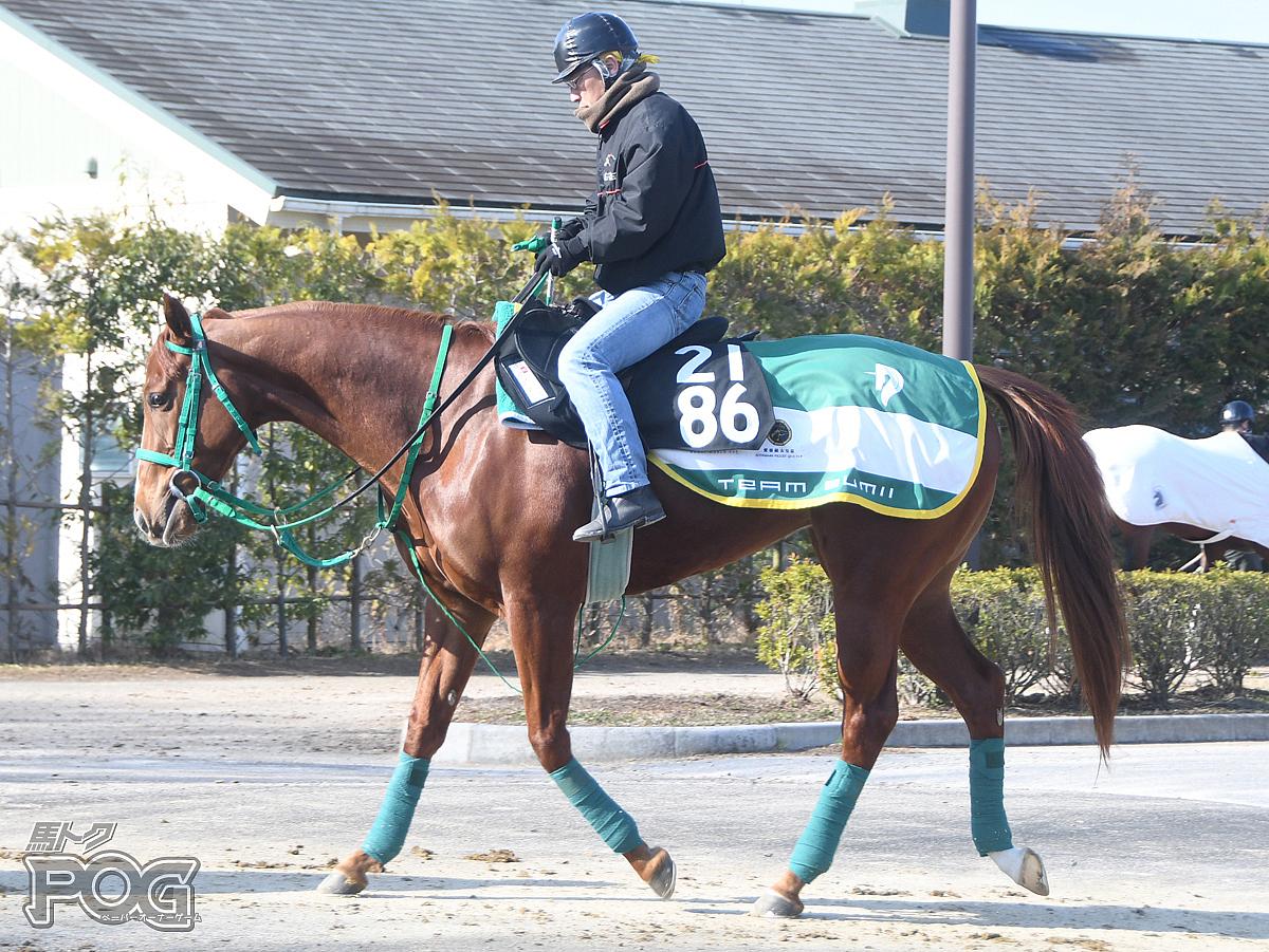 ポプラの馬体写真