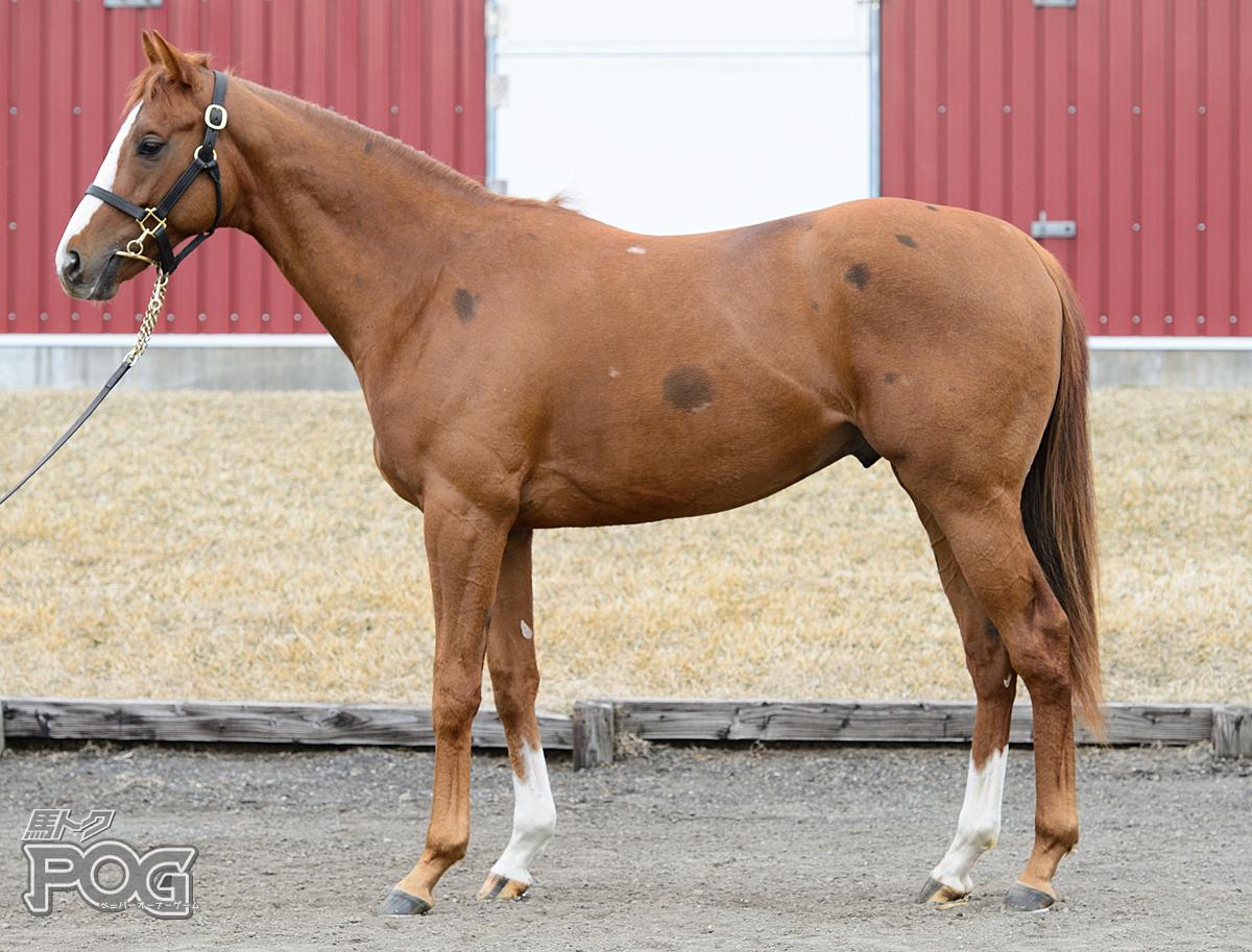 ロードハナブサの馬体写真