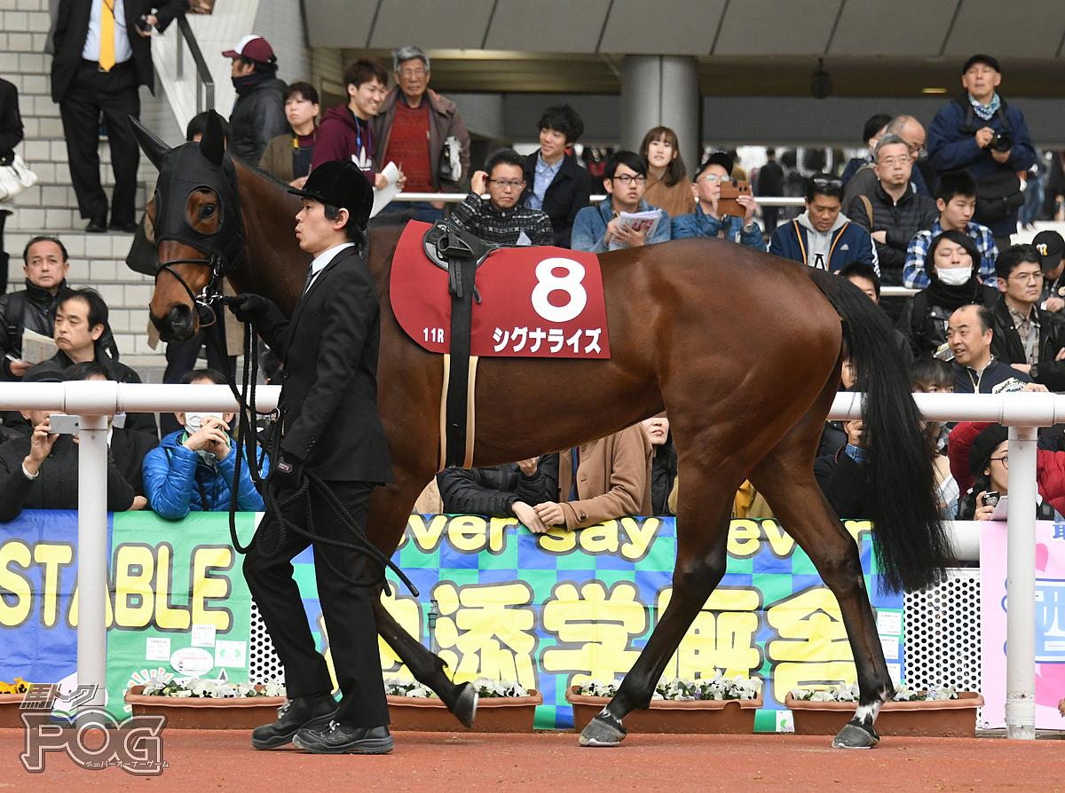 シグナライズの馬体写真