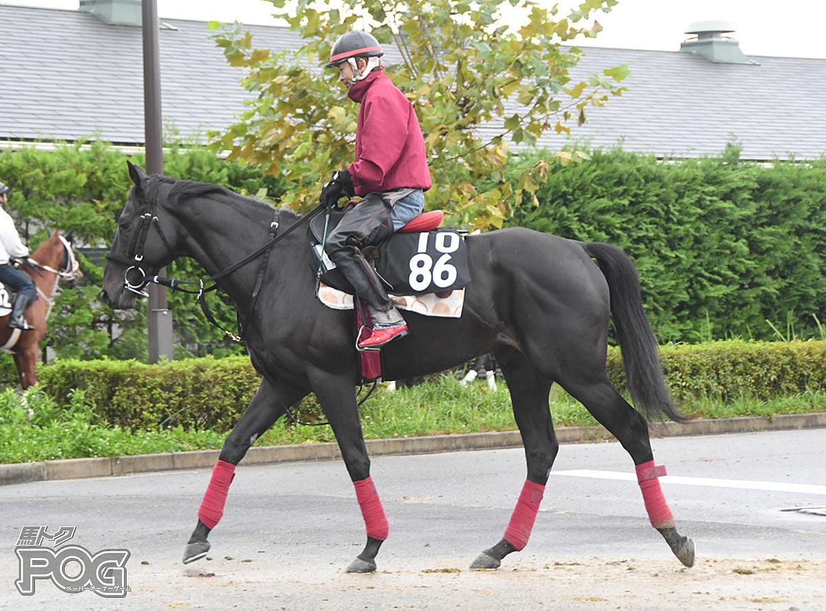ユイフェンネルの馬体写真