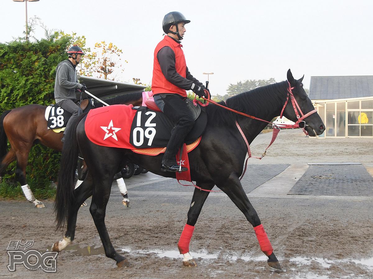 ミヤジフランガンの馬体写真