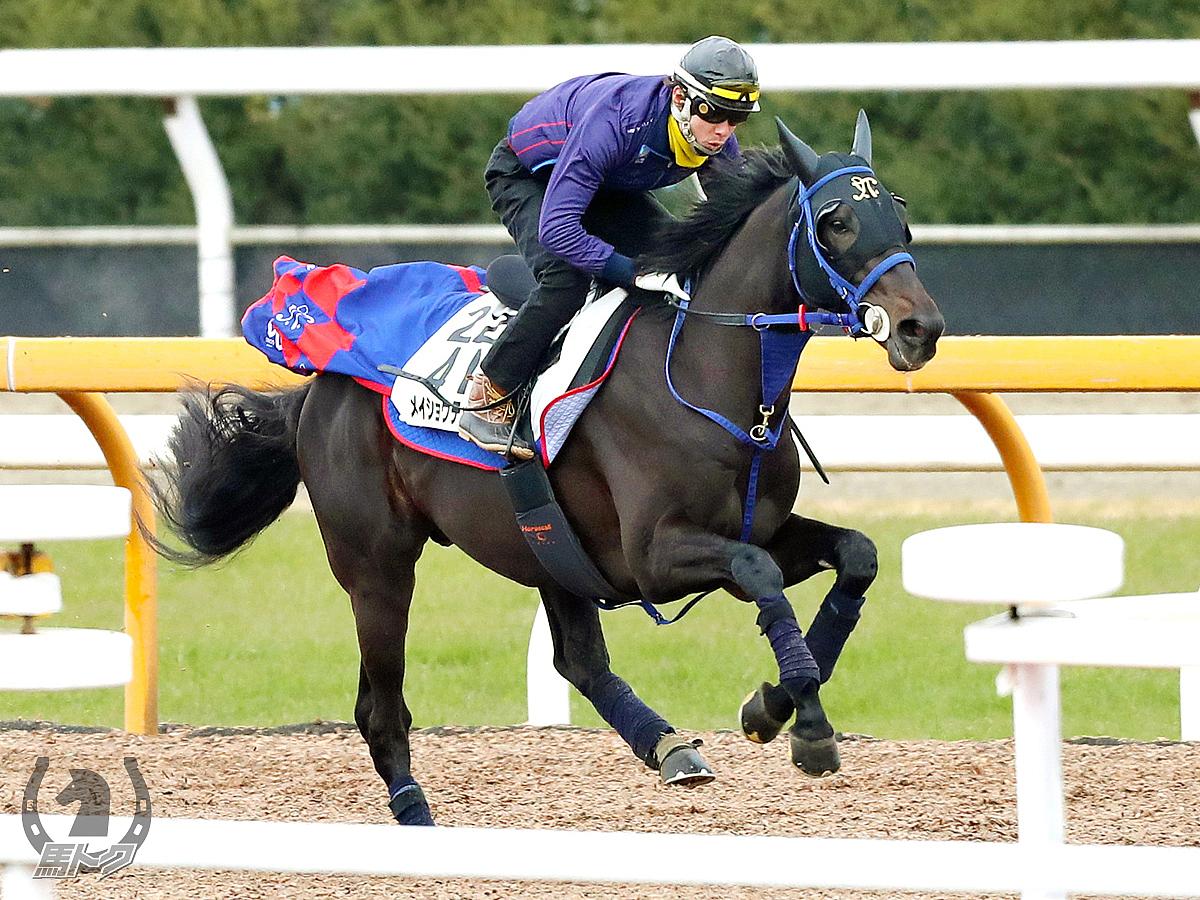 メイショウテッコンの馬体写真