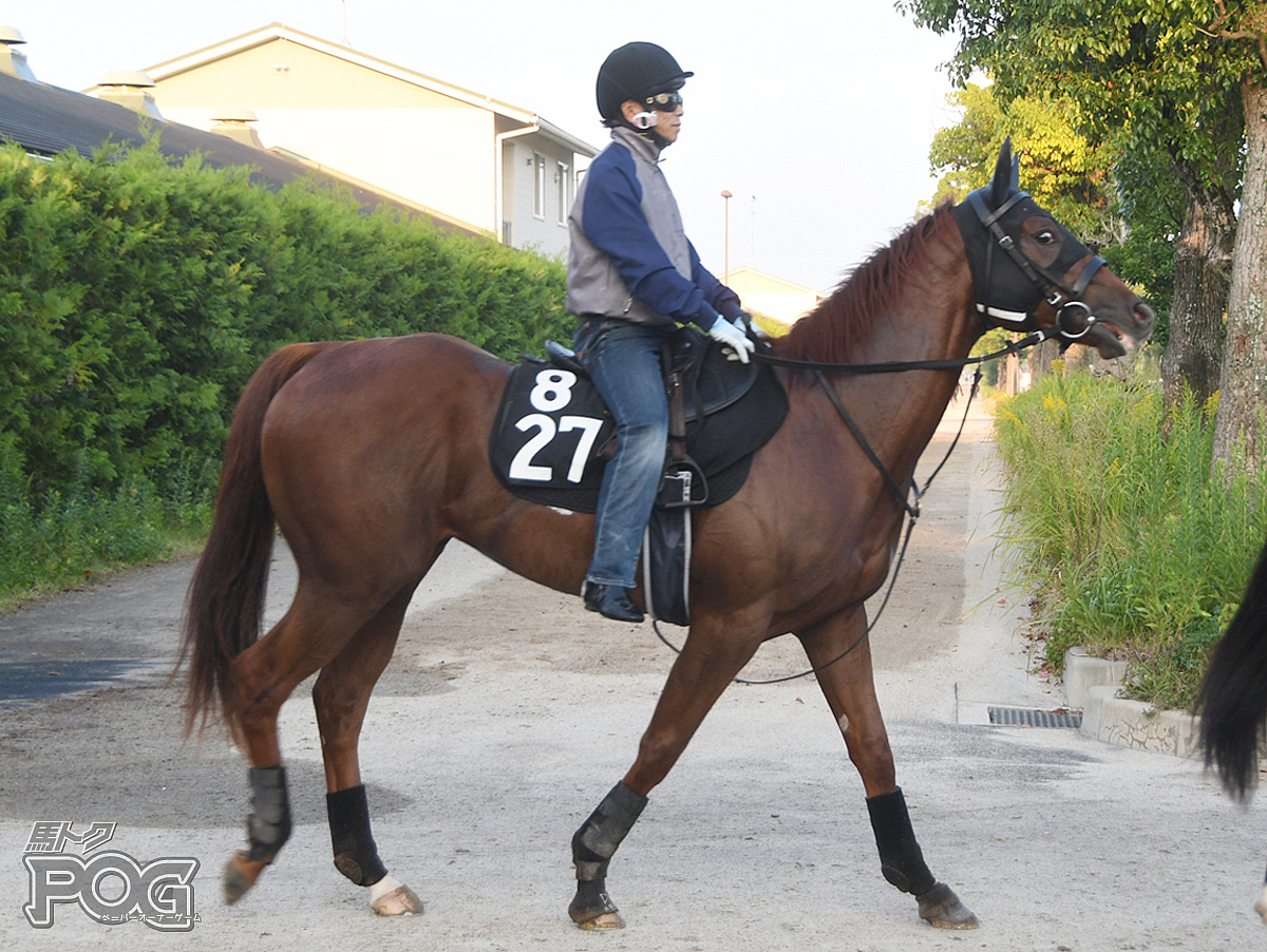 ビットピークスの馬体写真