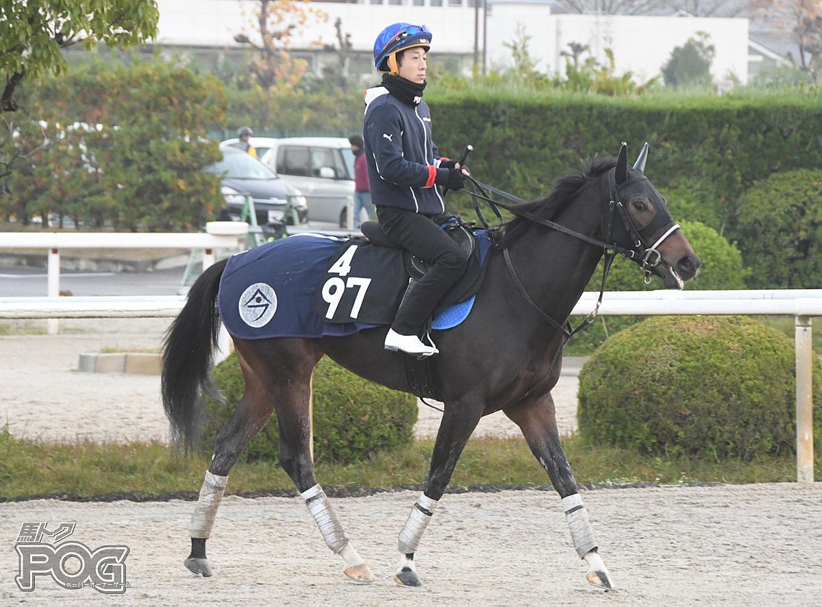 スイートベイの馬体写真