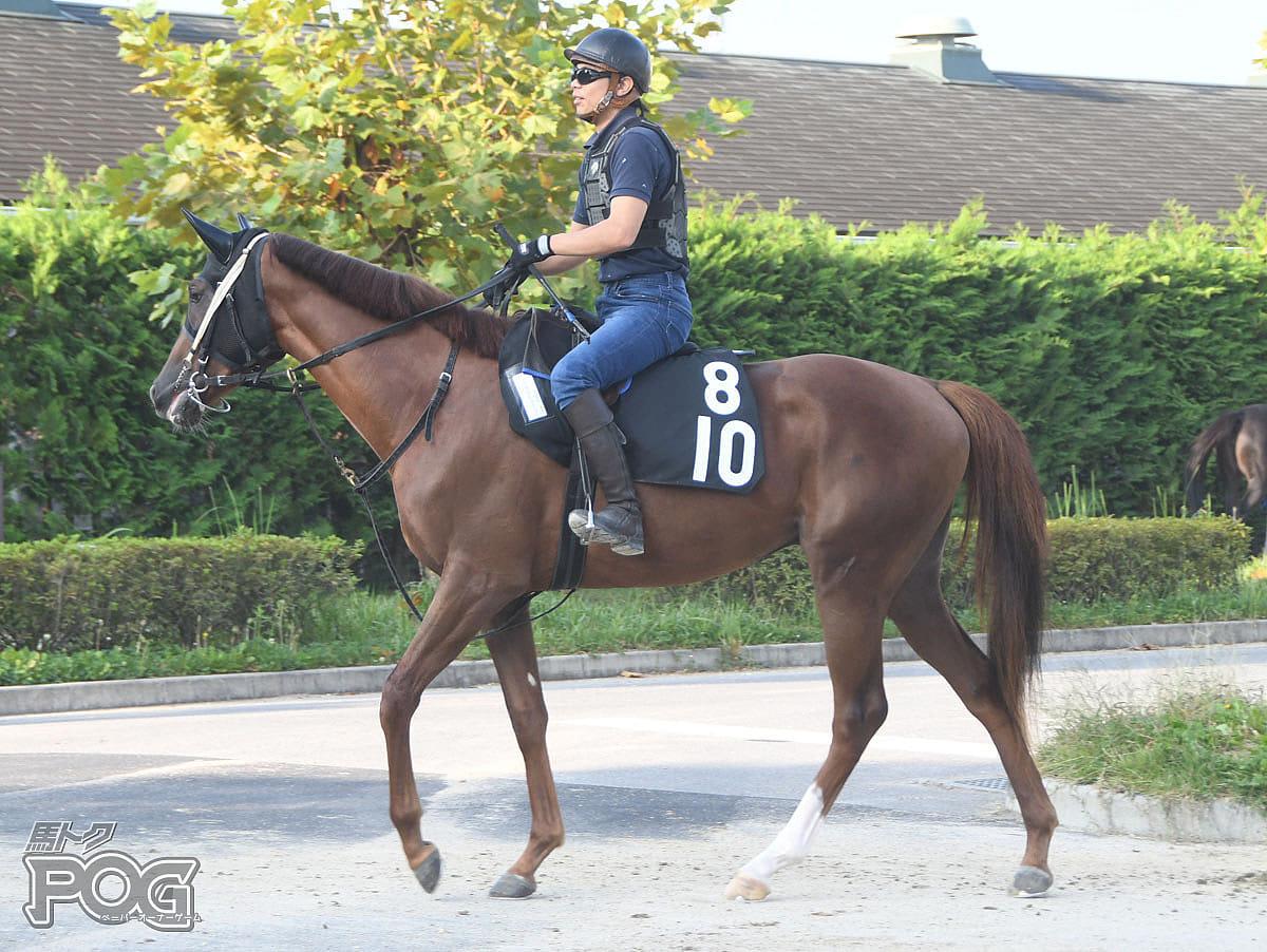 パープルヒストリーの馬体写真