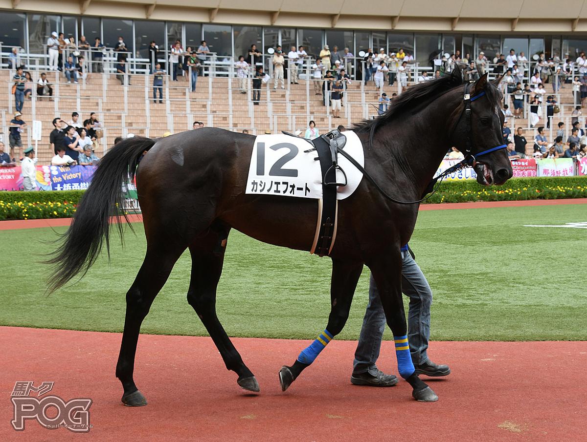 カシノエフォートの馬体写真