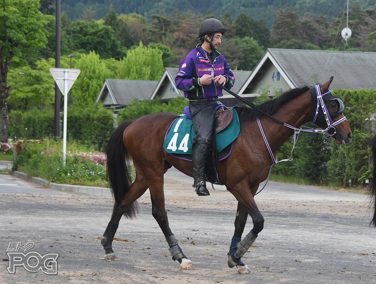 キムケンロードの馬体写真