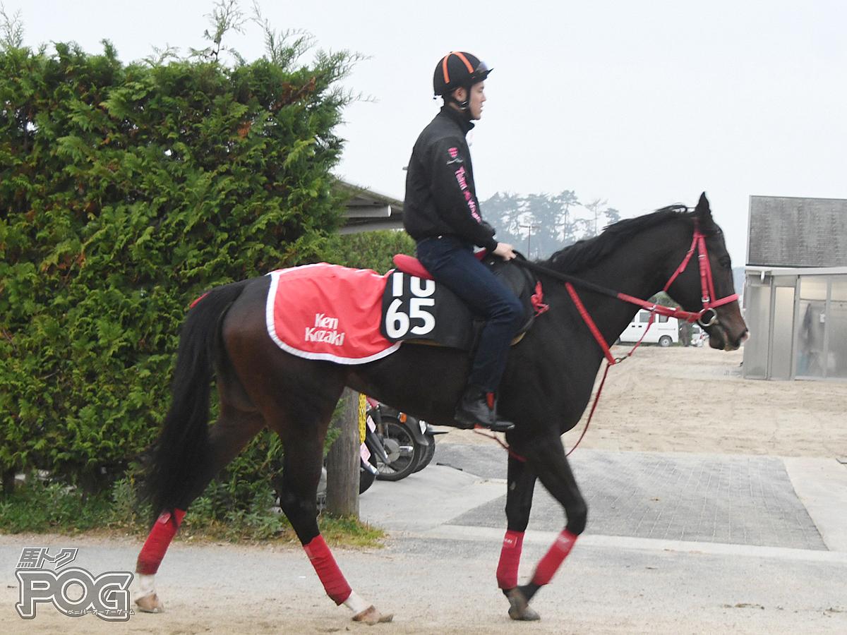 メープルの馬体写真