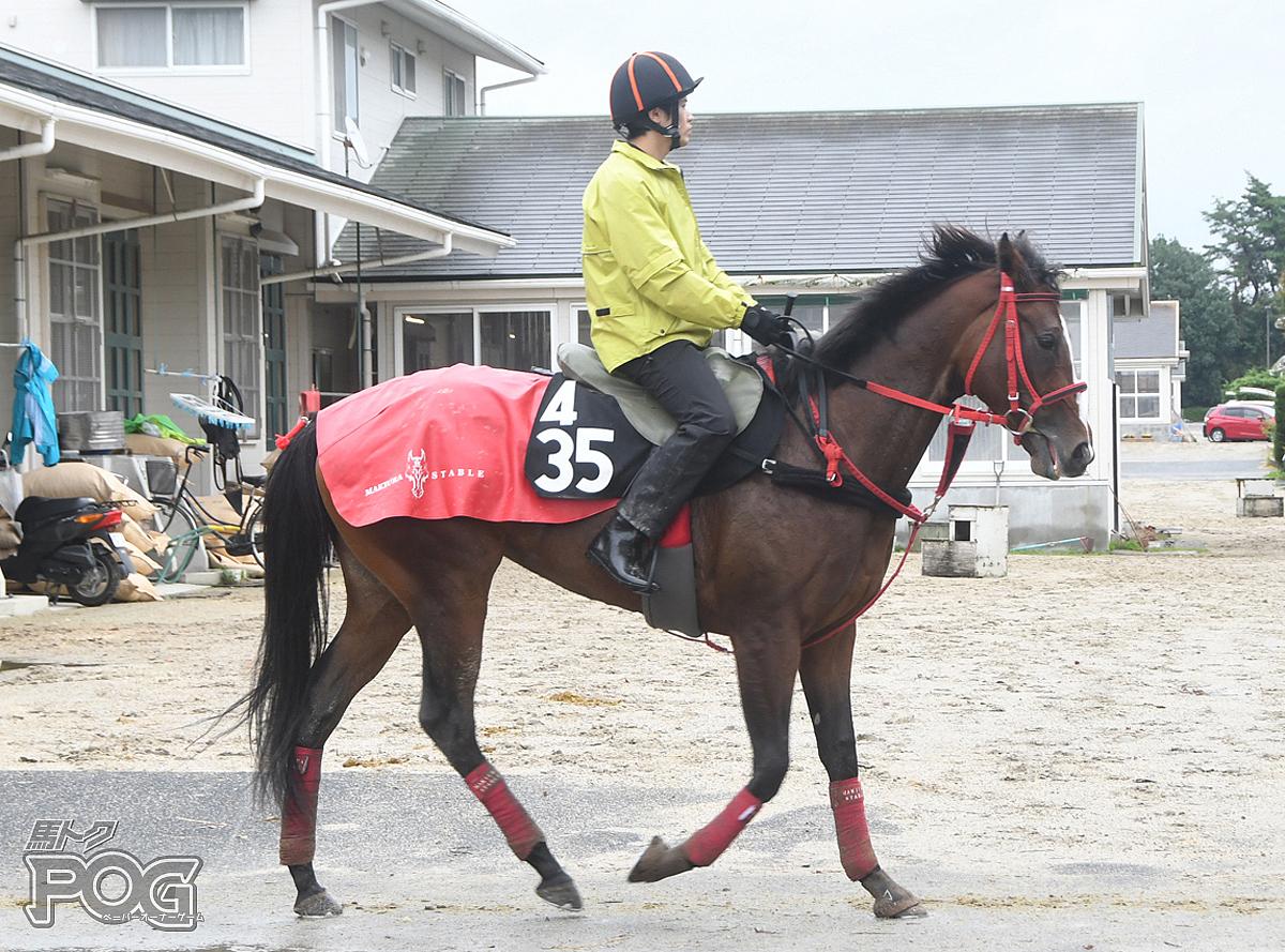 シップフォクイーンの馬体写真