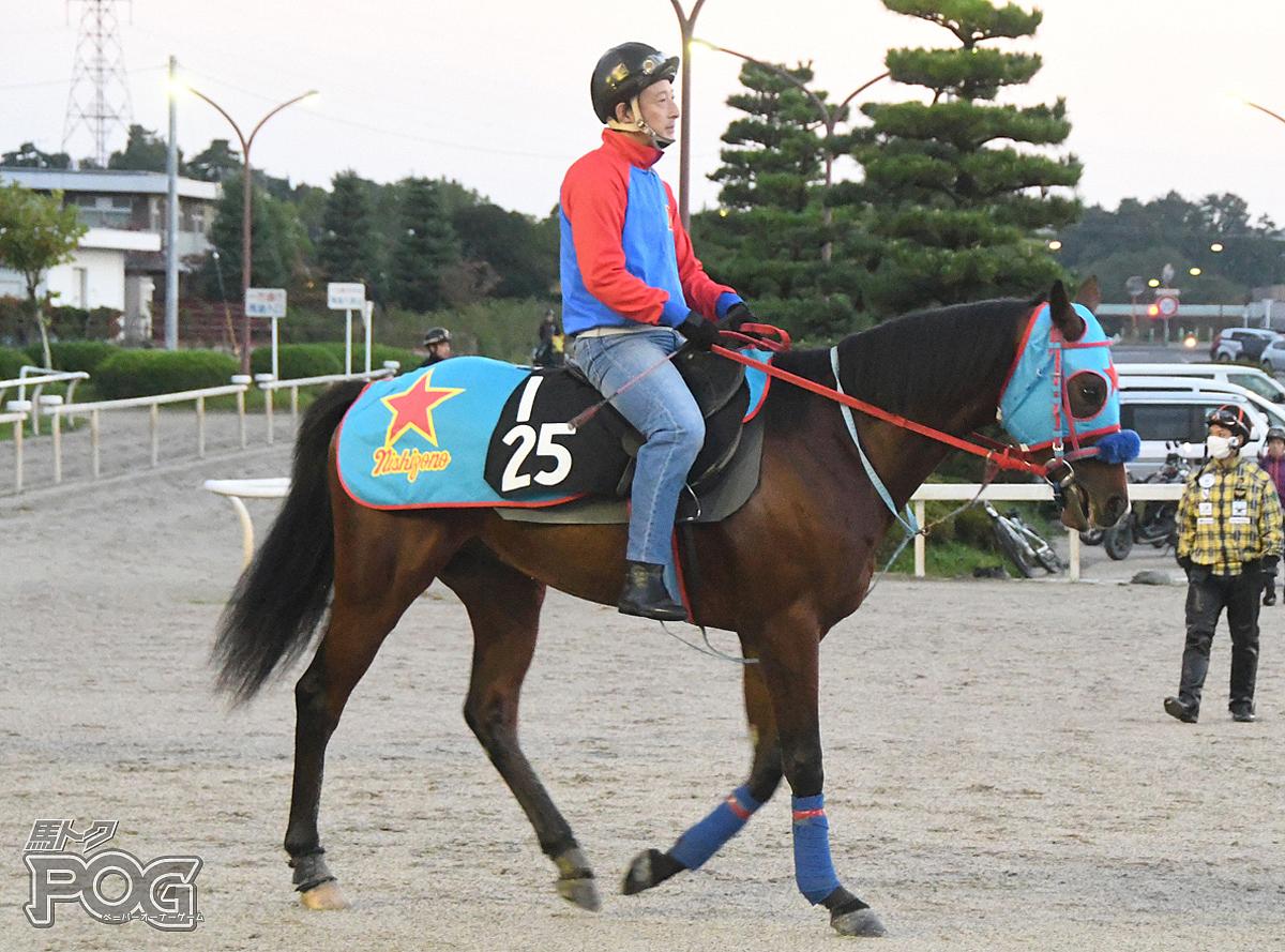 ウインシノビの馬体写真