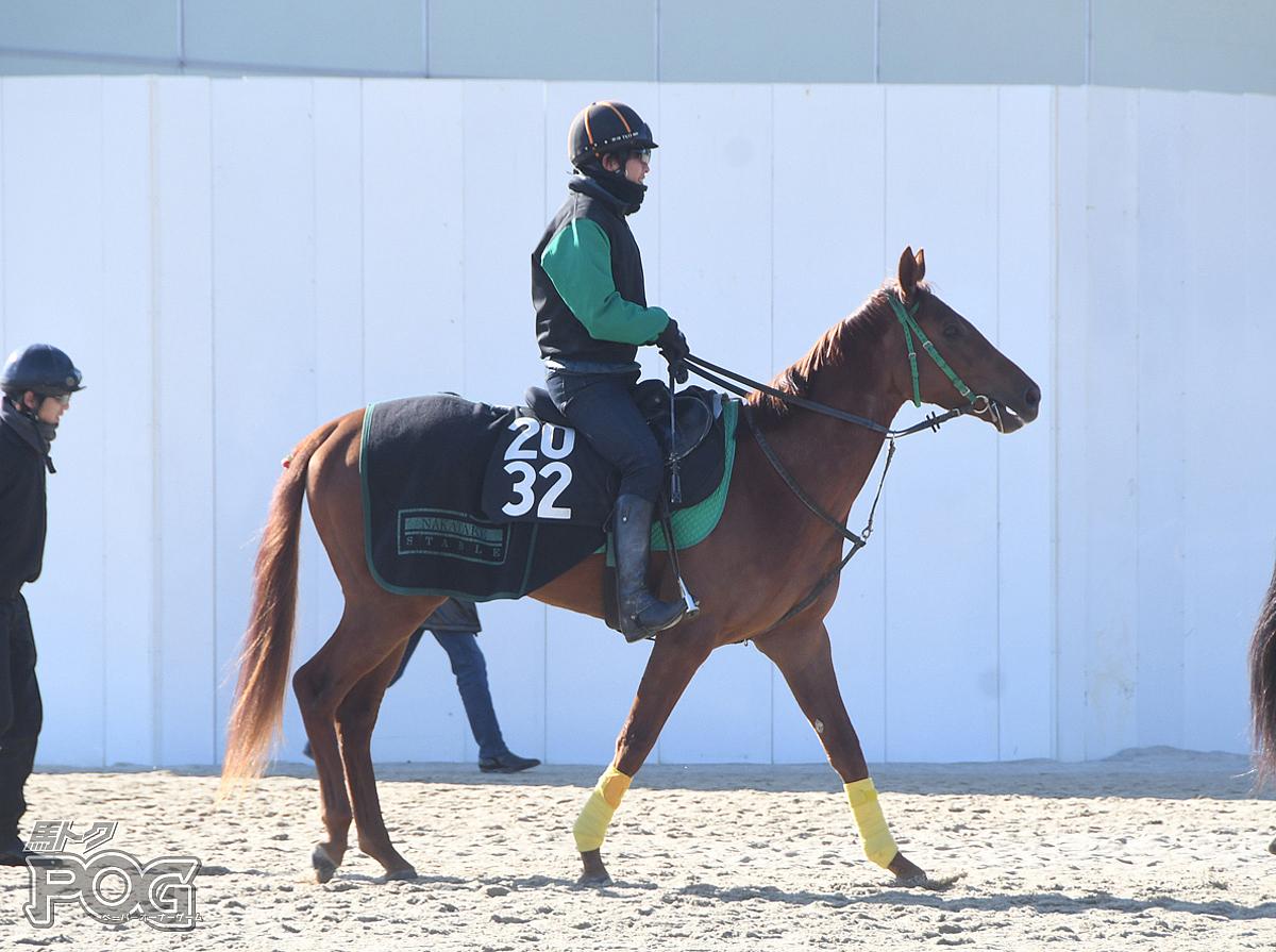 ジョーラテの馬体写真