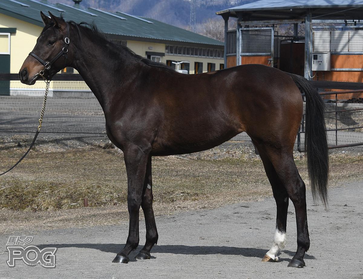 キョウエイポズナンの馬体写真