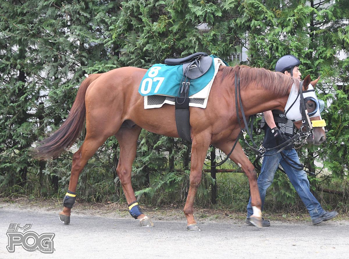 マッスルバローズの馬体写真