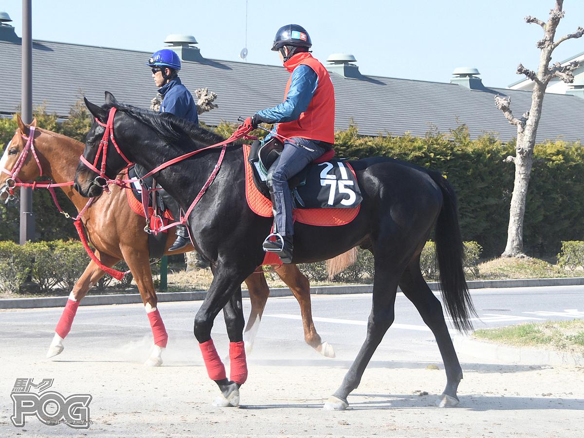 アイアンウェーブの馬体写真