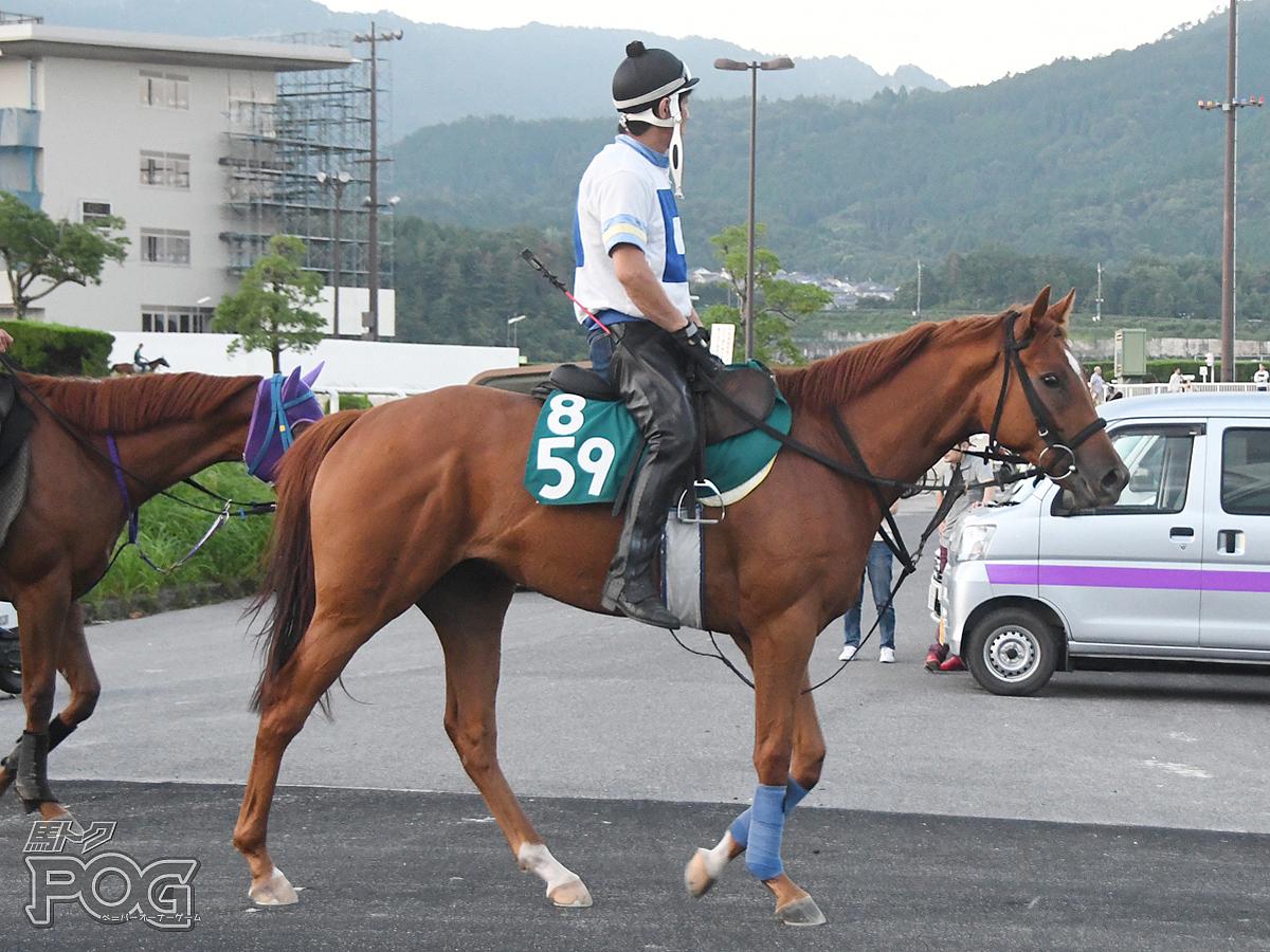セパヌイールの馬体写真