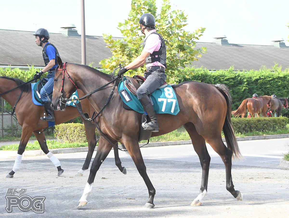 テイエムチャメワンの馬体写真