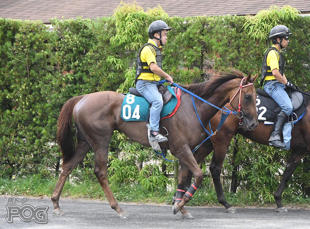 オーロスターキスの馬体写真