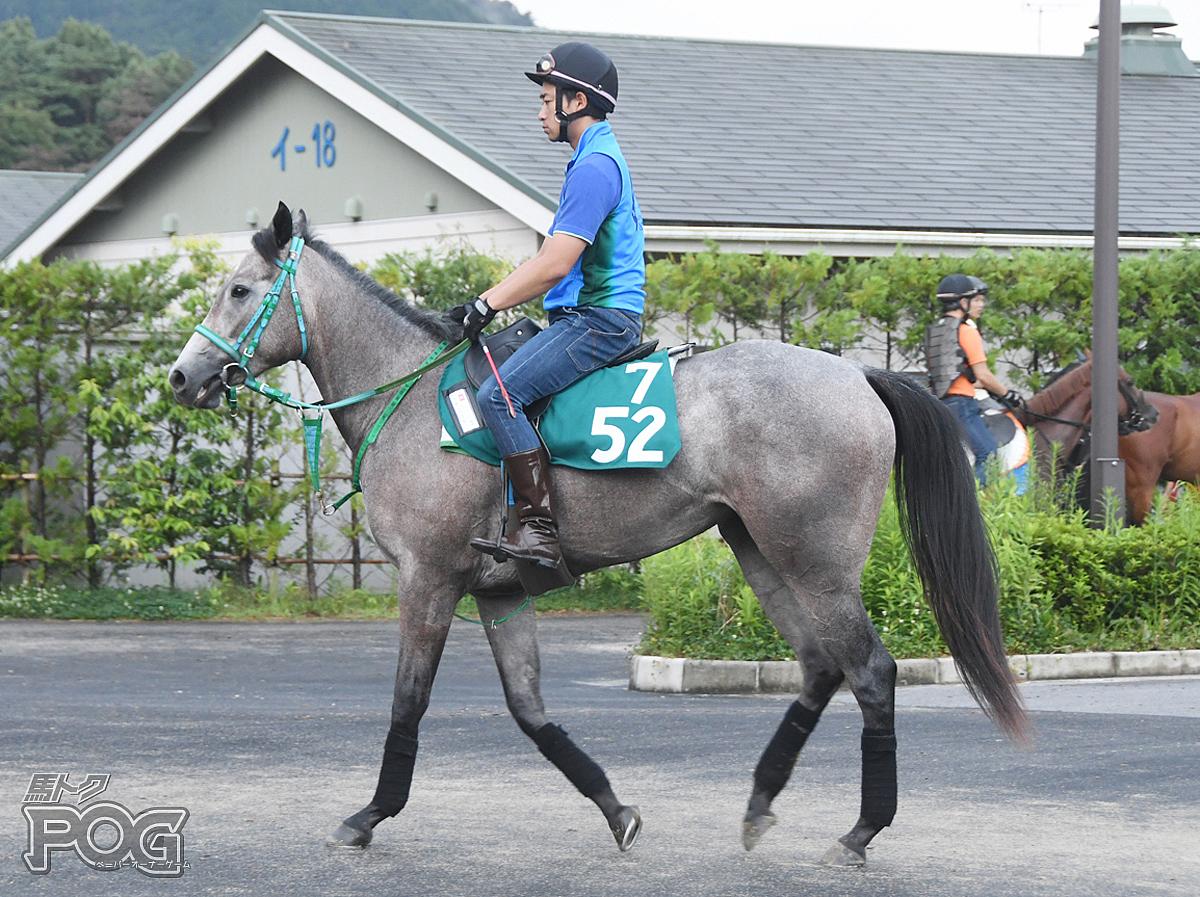 ラガーデリゲートの馬体写真
