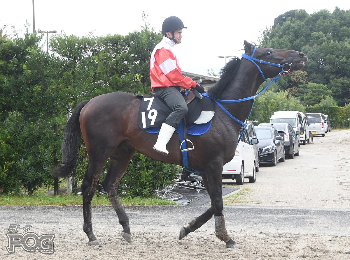 トランシャンの馬体写真