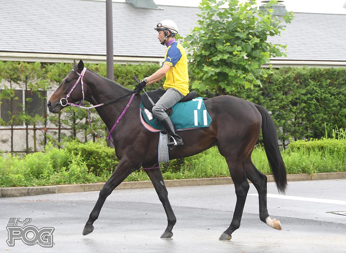 ワイルドシングの馬体写真