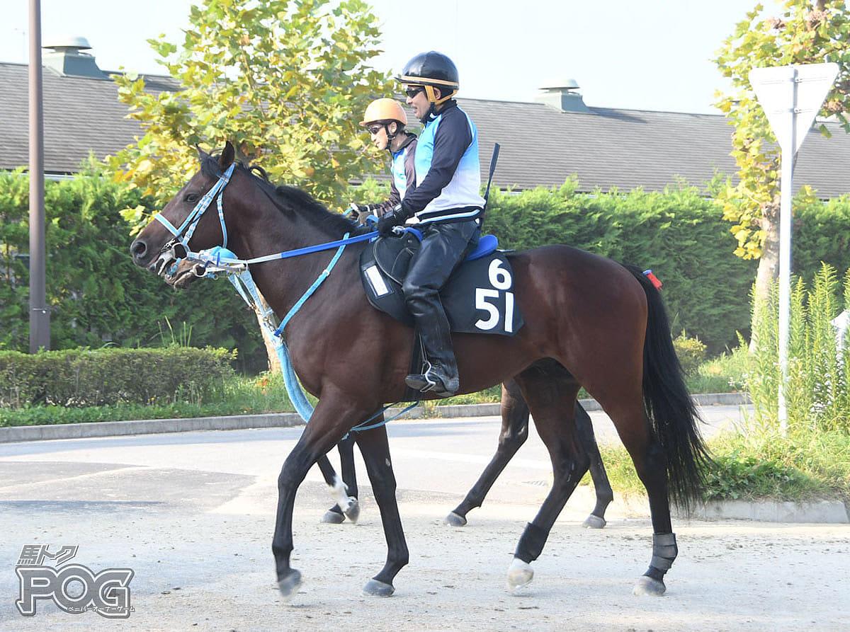 ツーエムアリエスの馬体写真