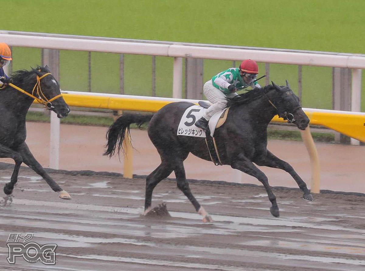 ビレッジキングの馬体写真
