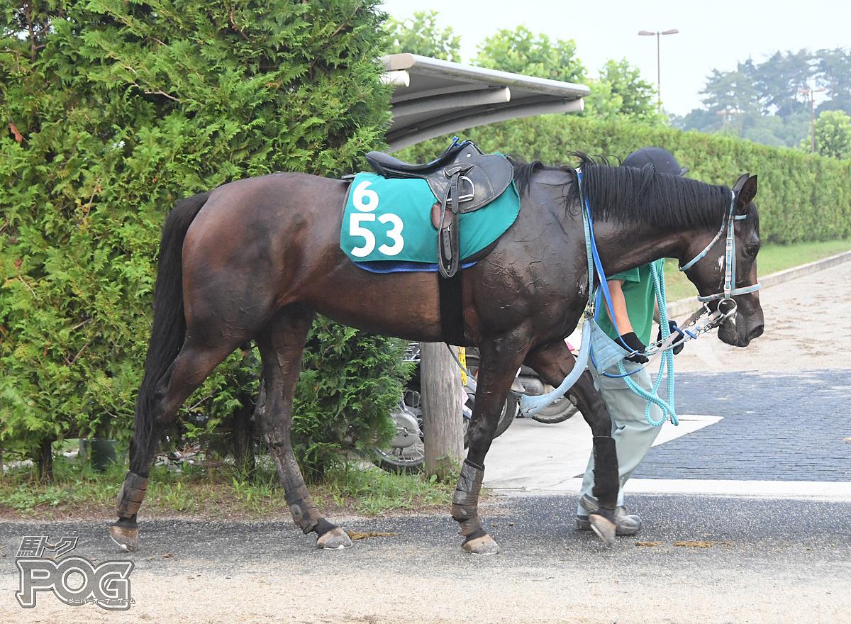 バトルガラクシアの馬体写真