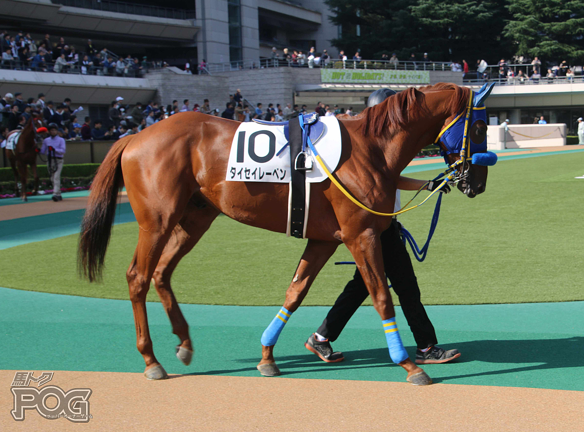 タイセイレーベンの馬体写真