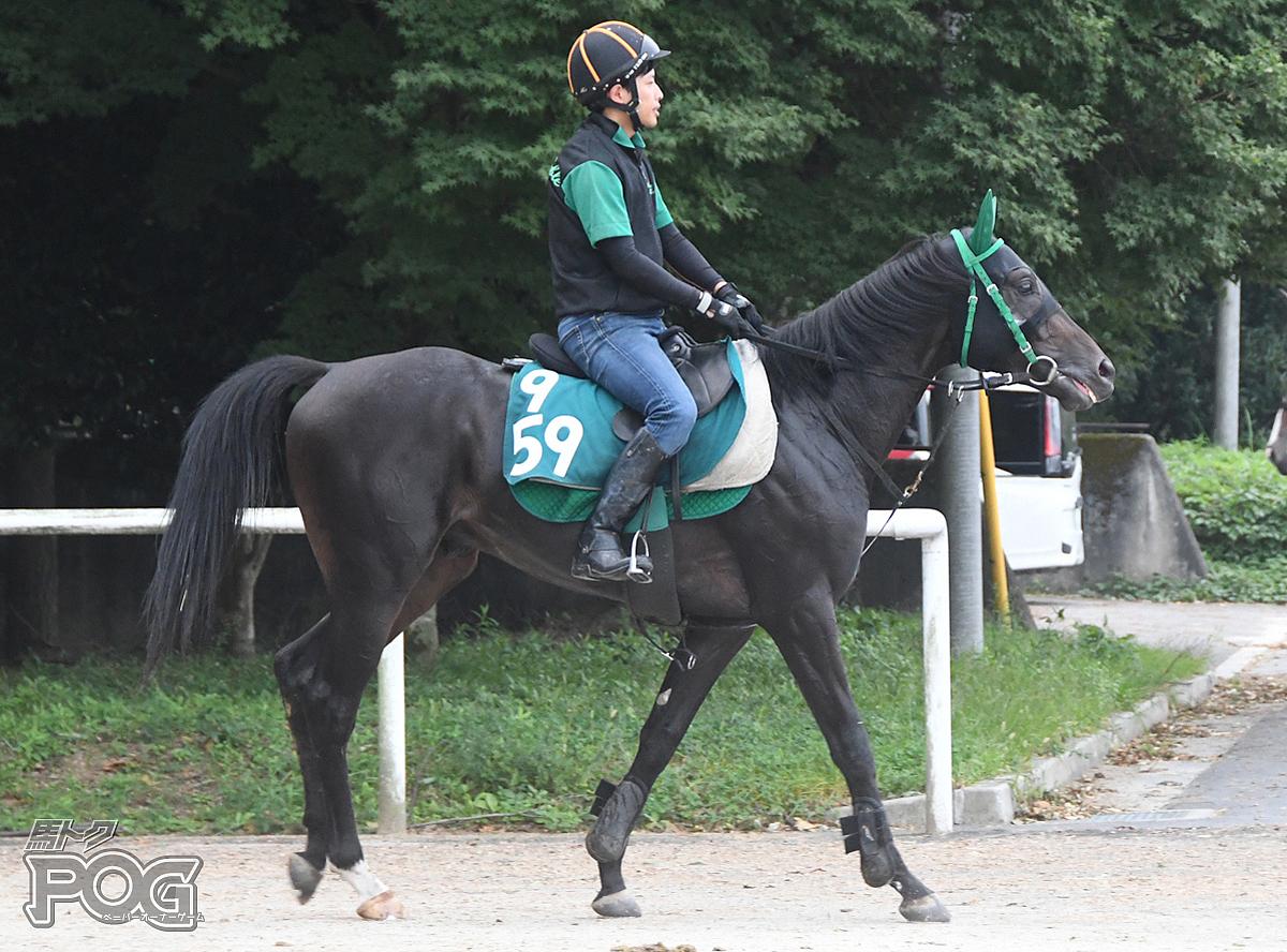 ブケパロスの馬体写真