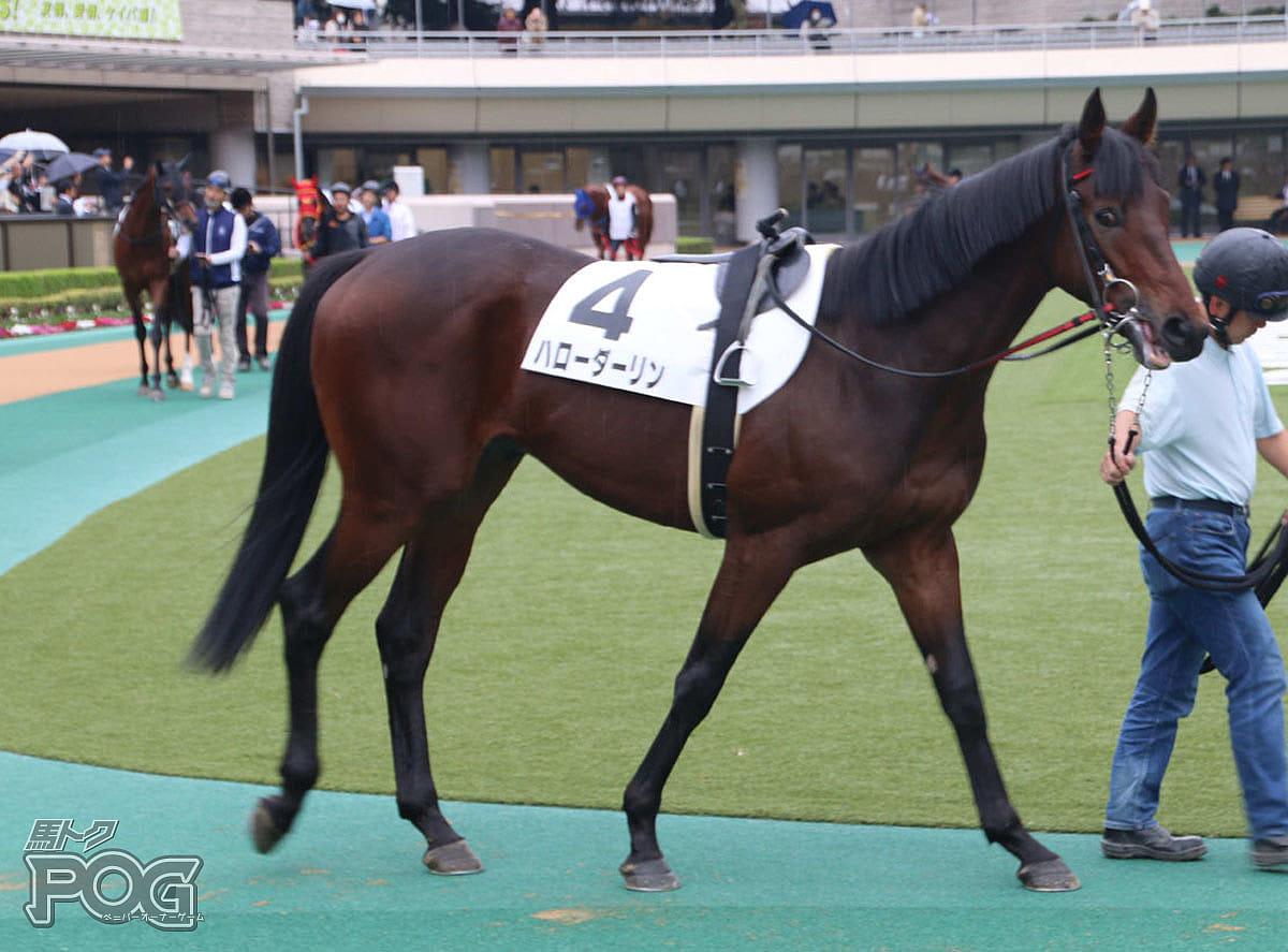 ハローダーリンの馬体写真
