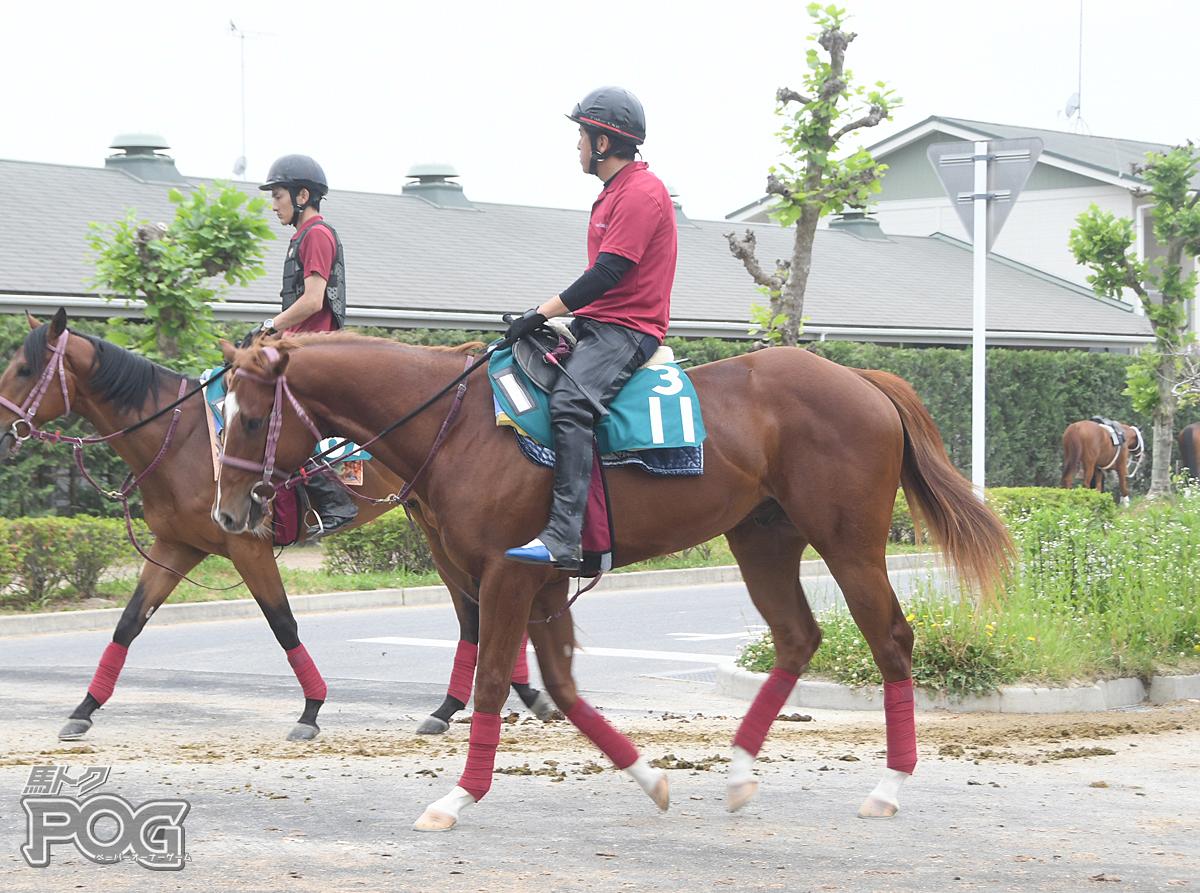 ワンダーコンセギルの馬体写真