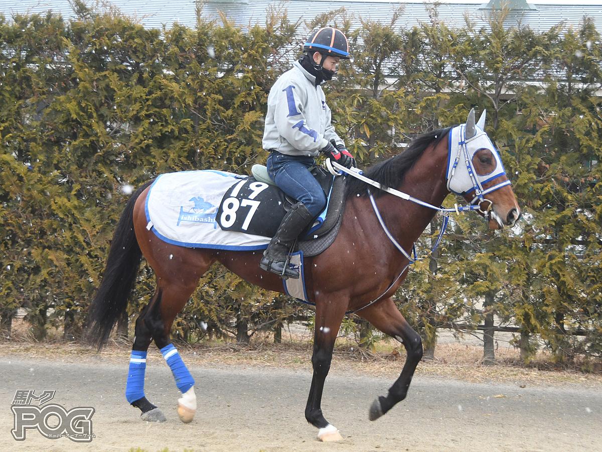 ワンダープボワールの馬体写真