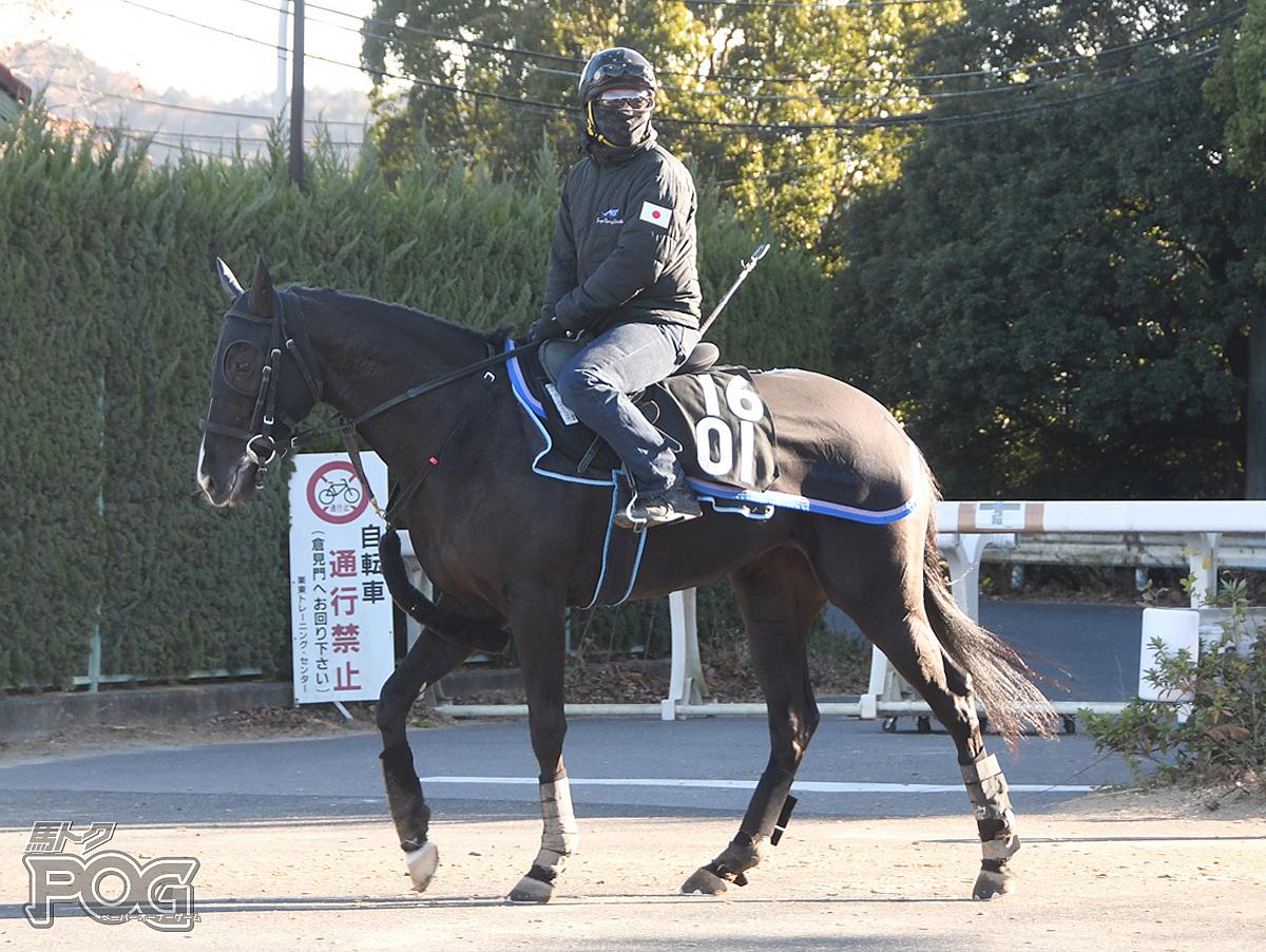 クリノアリエルの馬体写真